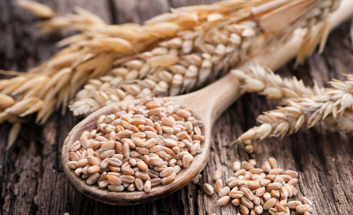 Hạt lúa mì hữu cơ sottolestelle