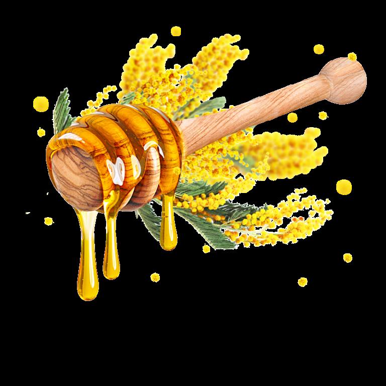 Mật ong hoa keo Acacia hữu cơ Sottolestelle